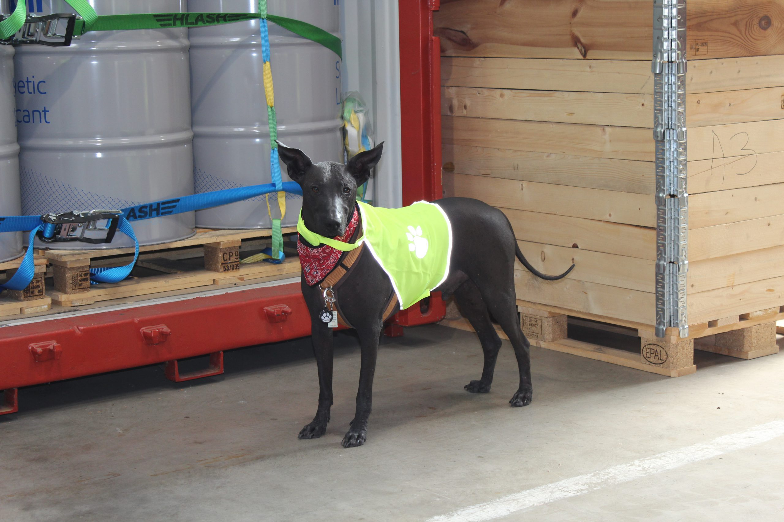 Ein Hund mit gelber Warnweste in einer Halle vor Fässern